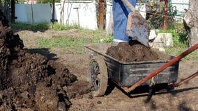 Ein Mann gräbt Düngemittel mit einer Schaufel, um den Boden und die Lasten es in einen Gartenwarenkorb für Verteilung um den Gart stock video