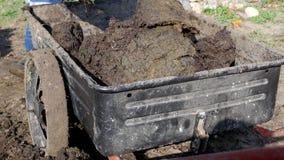 Ein Mann gräbt Düngemittel mit einer Schaufel, um den Boden und die Lasten es in einen Gartenwarenkorb für Verteilung um den Gart stock video footage