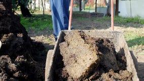 Ein Mann gräbt Düngemittel mit einer Schaufel, um den Boden und die Lasten es in einen Gartenwarenkorb für Verteilung um den Gart stock footage