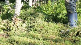 Ein Mann ist ein Landwirt in den Gummistiefeln im Vorstadtgebiet, ein Gemüsegarten, mithilfe einer Hacke das Gras preparin verrin stock footage
