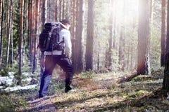 Ein Mann ist ein Tourist in einem Kiefernwald mit einem Rucksack Ein wandernder tr Stockbild