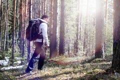 Ein Mann ist ein Tourist in einem Kiefernwald mit einem Rucksack Ein wandernder tr Stockfotografie