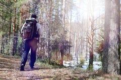Ein Mann ist ein Tourist in einem Kiefernwald mit einem Rucksack Ein wandernder tr Lizenzfreies Stockbild