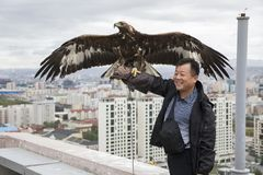 Ein Mann mit altai Steinadler mit Stadt von Ulaanbaatar am Hintergrund Lizenzfreie Stockfotografie