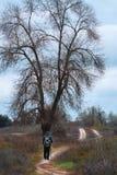 Ein Mann mit einem Stock geht entlang den Weg in der Natur lizenzfreie stockfotografie