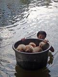 Ein Mann nimmt seine Hunde zur Sicherheit in einer überschwemmten Straße von Pathum Thani, Thailand, im Oktober 2011 lizenzfreie stockfotografie