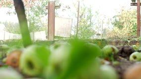 Ein Mann rollt einen Gartenwarenkorb an der Datscha für ladendes Düngemittel, Landhäuschenbereich stock footage