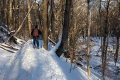 Ein Mann-Schneeschuhe auf Forest Trail Stockbild