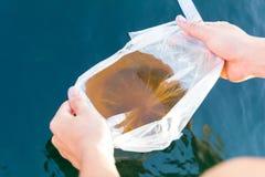 Ein Mann schnitt die Plastiktasche und wird larvale Garnele in SH freigeben Lizenzfreie Stockfotos