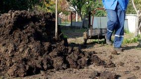 Ein Mann trägt einen Gartenwarenkorb mit dem Düngemittel für Transport um den Garten und befruchtet den Boden, im Freien, Mist stock video