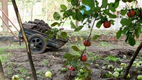 Ein Mann trägt einen Gartenwarenkorb mit dem Düngemittel für Transport um den Garten und befruchtet den Boden, Landhäuschenbereic stock footage