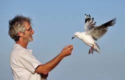 Ein Mann und eine Seemöwe, die aus seiner Hand heraus essen. Stockbild