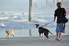 Ein Mann und seine Hundeausgabe setzen zusammen auf Strand Zeit fest Stockfotos