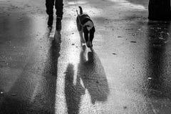 Ein Mannweg mit einem Hund auf Eis Lizenzfreies Stockfoto