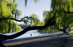 Ein Mannweg unter einem Baum Stockbild
