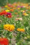 Ein Meer der Blumen lizenzfreie stockfotos