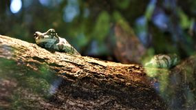 Ein merkwürdiger Frosch auf einem Stamm stockbild