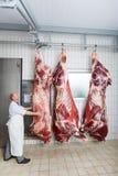Ein Metzger, der den abgezogenen Körper einer Kuh überprüft Stockbilder