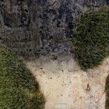 Ein Moos auf dem Stein Lizenzfreies Stockbild