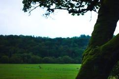 Ein moosiger Baum mit Rasenfläche backgound stockfotos