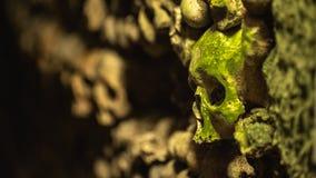 Ein moosiger Schädel in den Katakomben von Paris stockfotos