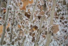 Ein Muster von trockenen Blättern und von Niederlassungen umfasst mit Schnee und Frost Stockfoto