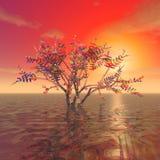 Ein mysteriöser Baum Stockfotografie