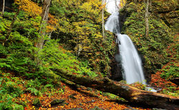 Ein mysteriöser Wasserfall, der hinunter die moosigen Felsen im Herbstwald stolpert Lizenzfreies Stockbild