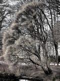 Ein mystischer Baum im Park - stilisiert zum Malen Stockbild