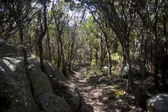 Ein mystischer Weg auf Berg Clarence in Albanien Stockfotografie