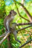 ein nachdenklicher einsamer Affe sitzt auf einem Zaun im Schatten Lizenzfreie Stockbilder