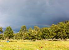 Ein Nachmittag im August, nach einem starken Regen, einem merkwürdigen Himmel, einem Regenbogen und einem Kalb lizenzfreies stockbild