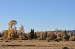 Ein Nachmittag im Herbst stockbild