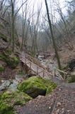 Ein Nadelholz im Osteuropa Stockbild