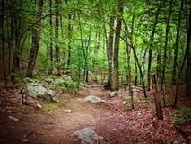Ein Nadelholz im Osteuropa Stockbilder