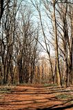 Ein Nadelholz im Osteuropa Stockfotos