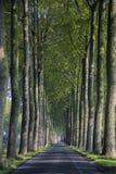 Ein Nadelholz im Osteuropa Lizenzfreie Stockfotos
