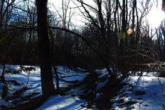 Ein Nagel gefahren in einen Stumpf, als er als Befestiger für einen Waldstuhl im Wald diente lizenzfreie stockfotos