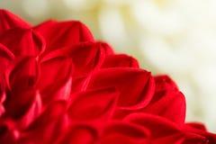 Ein Nahaufnahmebild einer roten Blume Stockfotos
