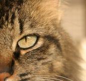 Ein Nahaufnahmefoto des Gesichtes einer Katze Stockbild