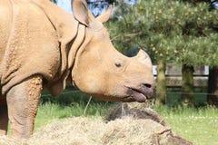 Ein Nashorn Lizenzfreies Stockbild