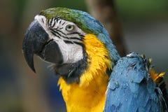 Ein nasser Papagei Stockfotos