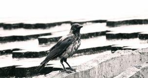 Ein nasser Vogel in einem Brunnen stockfoto