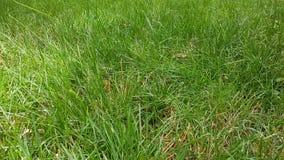 Ein natürlicher Hintergrund des grünen Grases Stockfotos