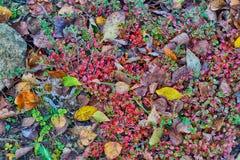 Ein natürlicher Hintergrund von Herbstfarben stockfotografie
