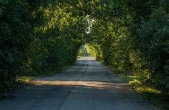 Ein natürlicher Tunnel von Bäumen auf einer Landstraße Selektiver Fokus stockbilder