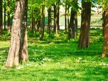 Ein Naturpark zu Agliana Stockbild