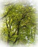 Ein nebeliger Tageskünstlerischer Baum im Seeufer Pokhara lizenzfreie stockfotografie