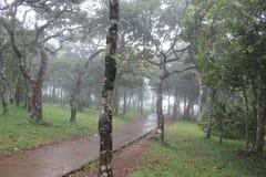 Ein nebeliger Wald stockfotografie