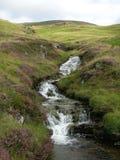 Ein Nebenfluss begleitet von der purpurroten Heide, die hinunter grüne Hügel an Glenshee-Tal, Grampian-Berge, Schottland läuft stockfoto